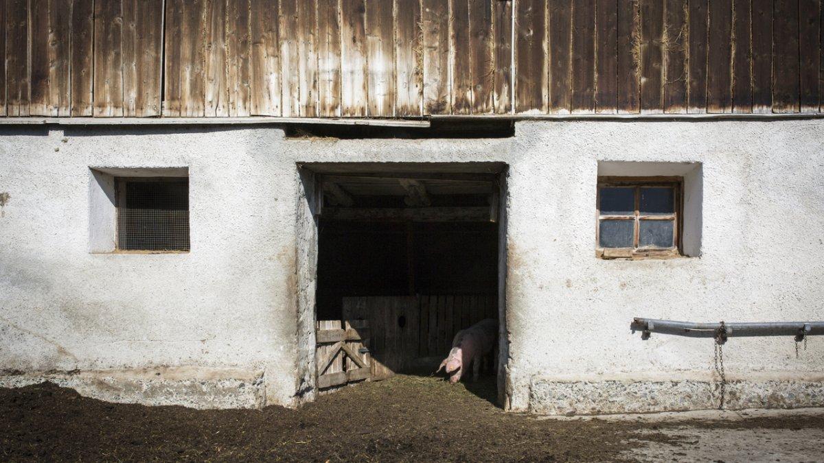 Le respect des animaux est très cher aux Maas, © Tirol Werbung/Lisa Hörterer