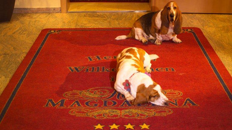 Hôtel Magdalena - des vacances bien-être de pure détente avec votre chien, © Hotel Magdalena