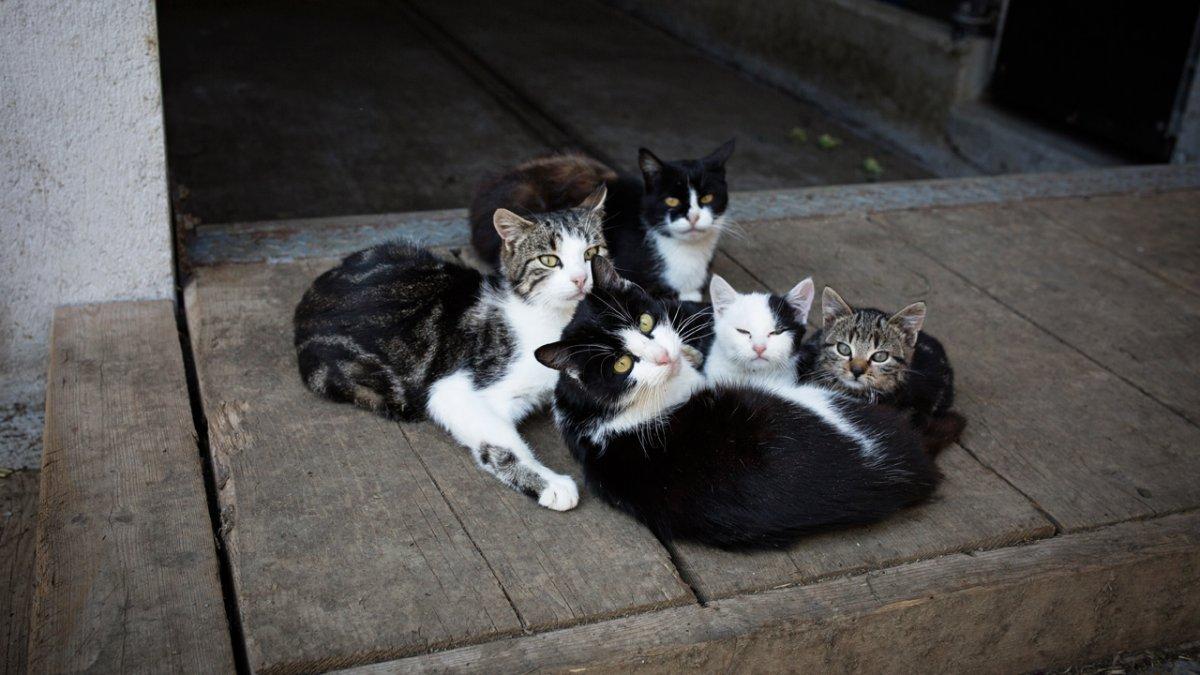 Chats et chatons, © Tirol Werbung/Lisa Hörterer
