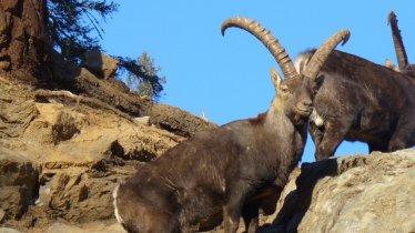Réserve d'Assling, © Erlebniswelt/Wildpark Assling