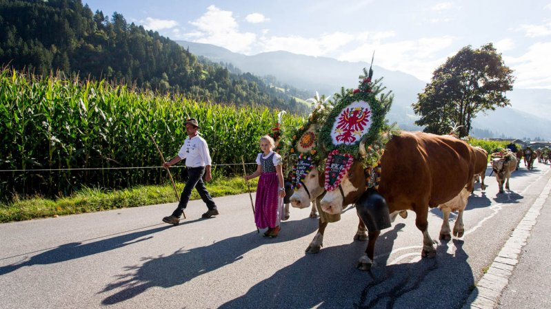 Fête de la transhumance de Gerlos, © Zillertal Tourismus/Marco Rossi