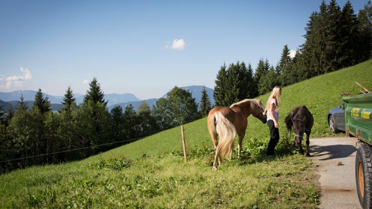 La ferme Siedlerhof sur la Glantersberg entourée de ses pâturages et de ses forêts., © Tirol Werbung/Lisa Hörterer