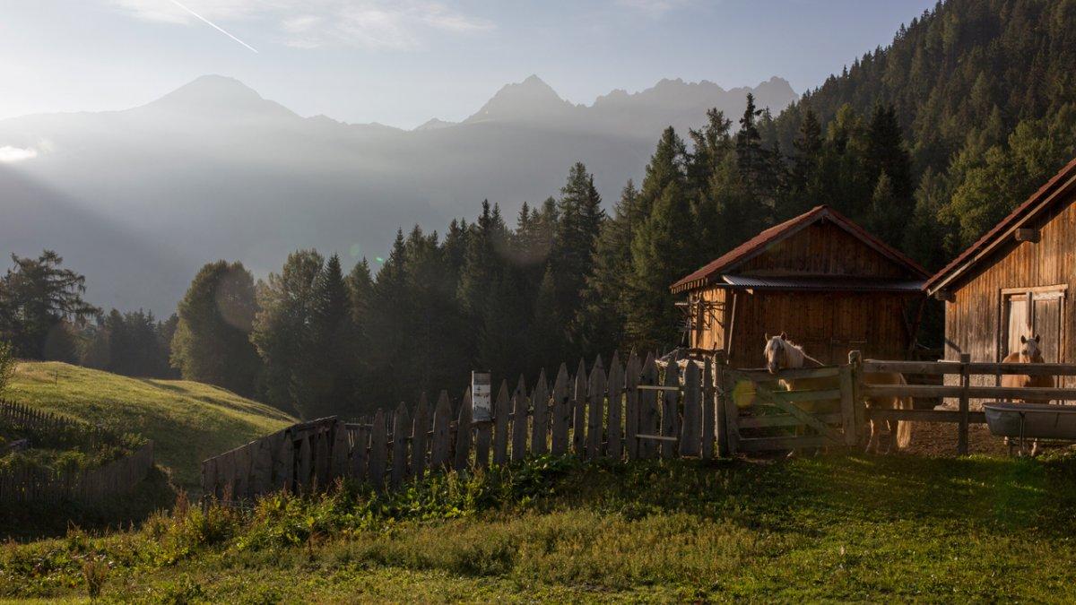 Les chevaux Haflinger vous attendent pour une balade, © Tirol Werbung/Lisa Hörterer