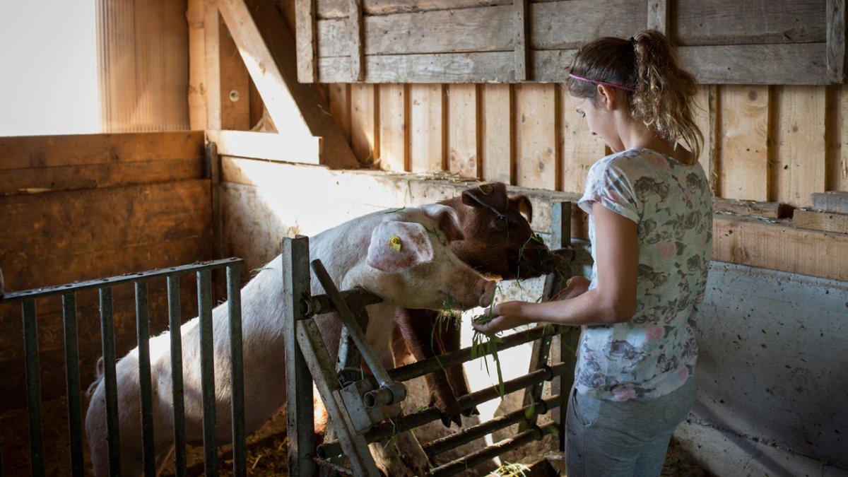 Nourrir les cochons, © Tirol Werbung/Lisa Hörterer