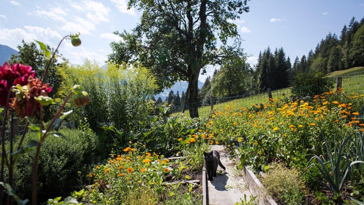 Le jardin de légumes et de fruits apporte tous les ingrédients nécessaires aux préparations faites maison, © Tirol Werbung/Lisa Hörterer