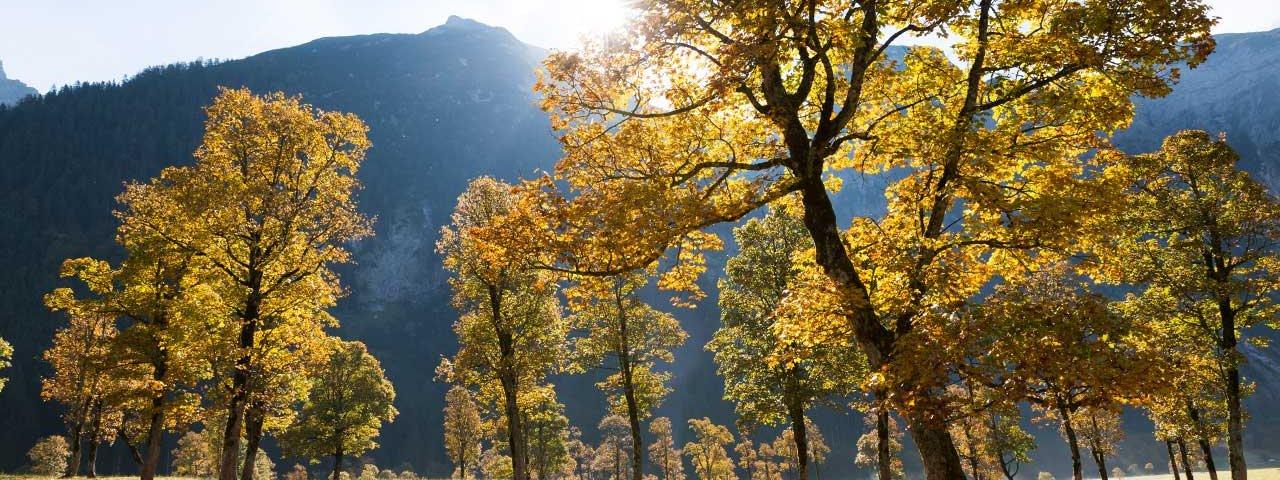 Le parc d'érables du Eng, © Tirol Werbung/Webhofer Mario