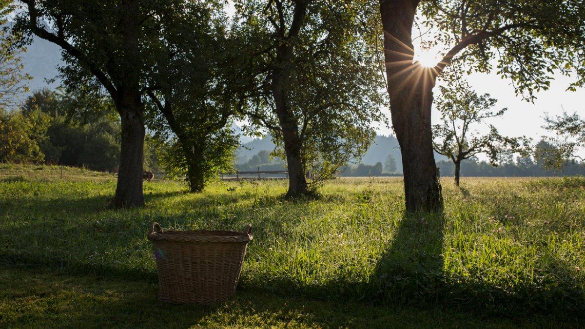 Arbres fruitiers, pâturages, champs fleuris - Paysage estival dans les montagnes, © Tirol Werbung/Lisa Hörterer