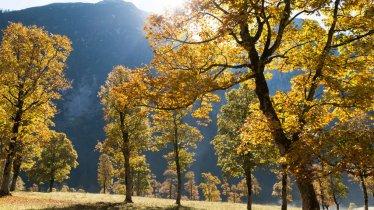 Le Grand parc d'érables, Karwendel, © Tirol Werbung/W9 Studios