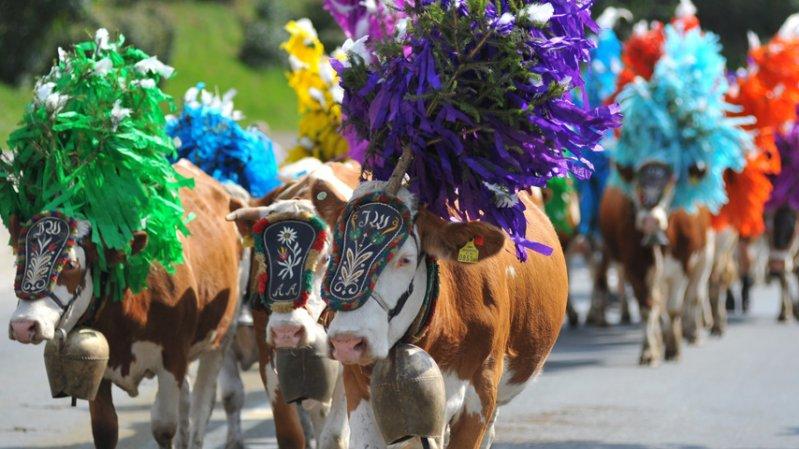 Le passage des vaches à Hopfgarten, © Hannes Dabernig/TVB Kitzbüheler Alpen - Brixental