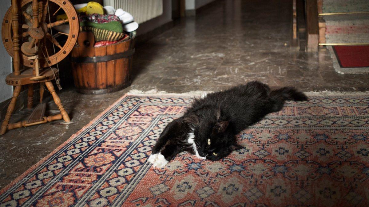 Les chats de la ferme ont tout compris! Imitez-les., © Tirol Werbung/Lisa Hörterer