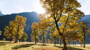 Le grand regroupement d'érables du parc naturel de Karwendel (Großer Ahornboden), © Tirol Werbung