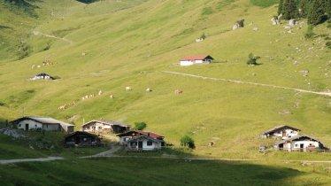 l'alpage Feldalm, © Irene Prugger